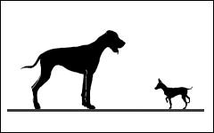 Cours de Comportement pour chiens, cours pour chiens, Monthey, Valais