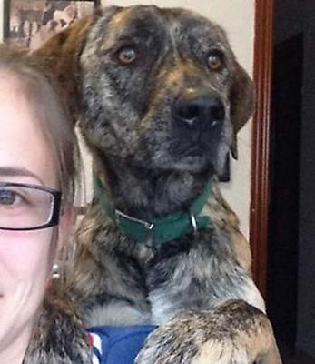 Edouardo, gentil chien de 4 ans à adopter