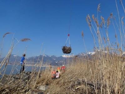 Récolte de bois aux Grangettes dans les filets d'Air Glacier
