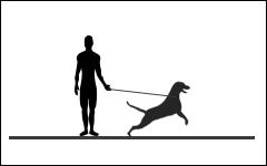 Cours pour chiens, cours obligatoire pratique, Monthey, Suisse