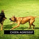 Cours comportement canin, chien agressif, école pour chiens, Messerknecht, Monthey
