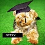 Sensibilisation canine cours théorique, formation des nouveaux propriétaires de chien, Ilsegret Messerknecht, Monthey, Valais