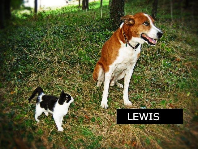 Cours d'éducation canine, la pratique avec I. Messerknecht à Monthey, Valais