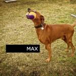 Cours chiens, Cours privés pour chiens, Suisse Romande, Monthey, Valais, Messerknecht