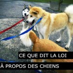 Ce que dit la loi à propos des nouveaux chiens - Messerknecht, Monthey