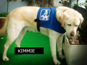 Kimmie, Chienne guide aveugle et malvoyant