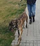 Je suis un chien et je recherche une maison d'accueil