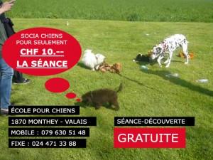 Cours et club de socialisation des chiens de Monthey, régions Valais et Vaud