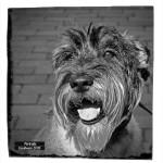 Portraits Photos de chiens - Caniboum 2015