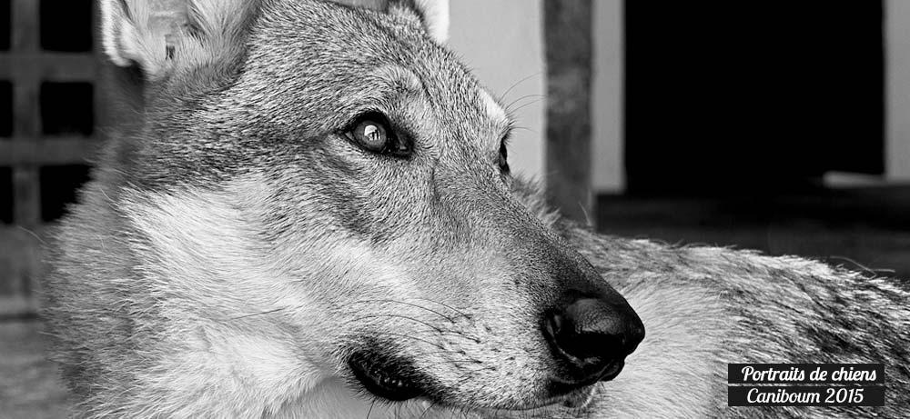 Portraits photos de chiens