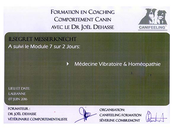 instructeur canin - Attestation cours canin Dr Dehasse Joël - module 7