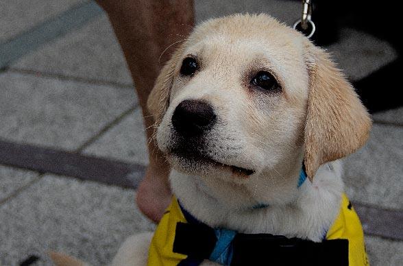 Formation canine obligatoire abandonnée en 2017