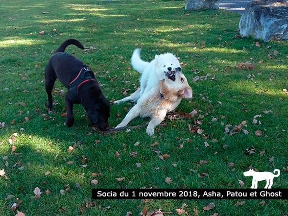 Asha, Patou et Ghost - Éducation canine-Monthey