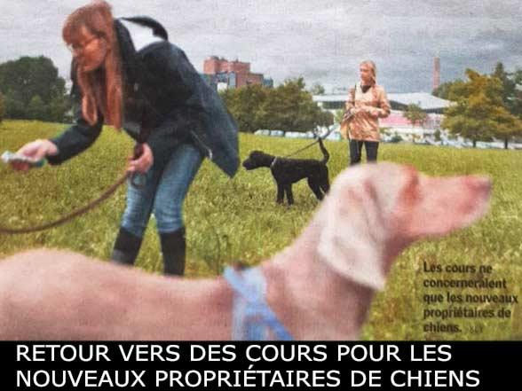 Cours canins Valais, le retour