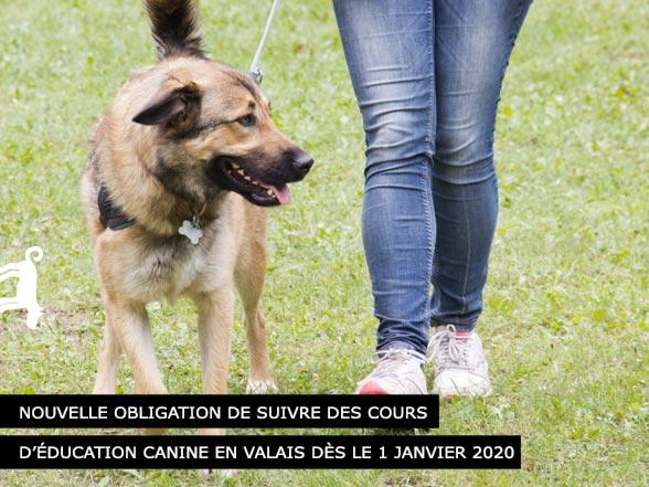 Education canine obligatoire en 2020 en Valais