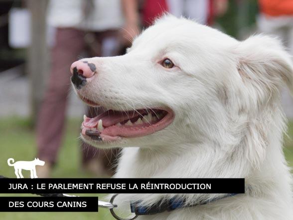 Le Jura refuse les cours canins