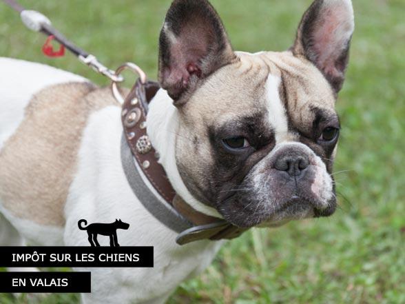 Impôt sur les chiens en Valais