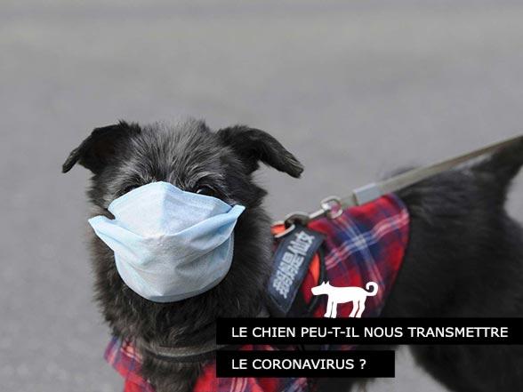 Le chien peut il transmettre le coronavirus à l'homme?