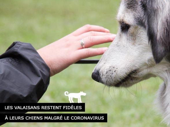 Les Valaisans restent fidèles à leurs chiens
