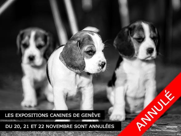 L'exposition canine 2020 à Genève est annulée