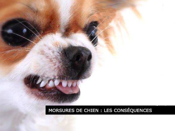 Morsures de chiens