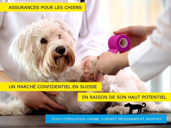Assurances pour chiens en Suisse