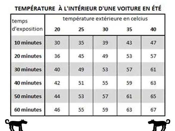 Chien : température à l'intérieur des voitures en été