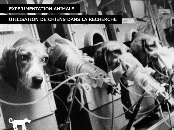 Utilisation des chiens - Expérimentation animale