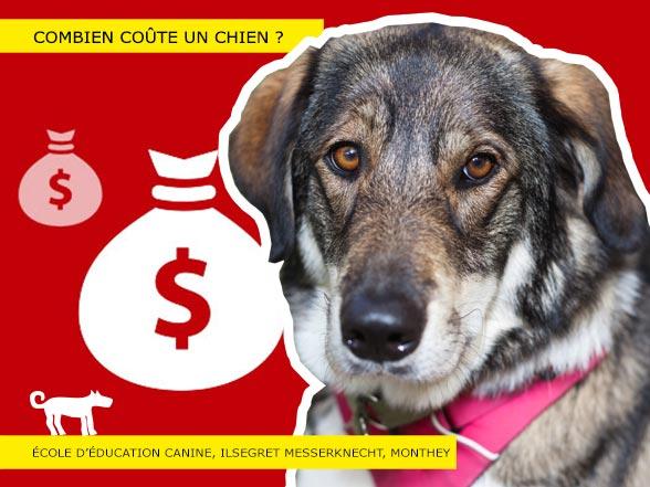 Prix d'un chien en Suisse ?