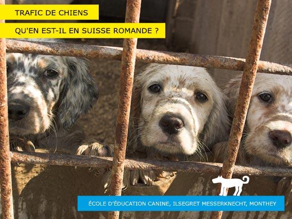 Trafic de chiens en Suisse et en Europe