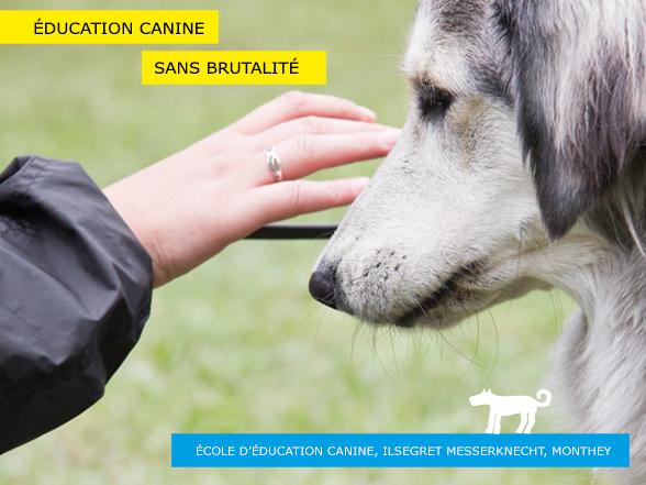 Dressage d'un chien sans brutalité